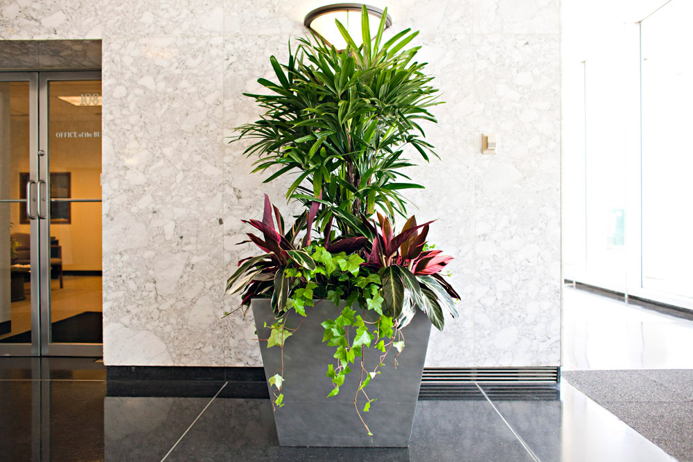 Office Plant Services From Phillip S Interior Plants Displays