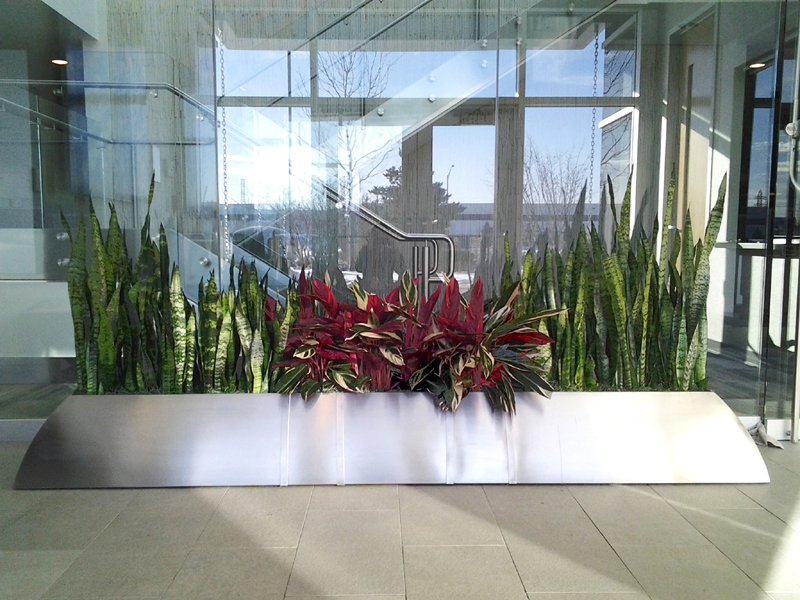 Image Result For Good Plants For Office