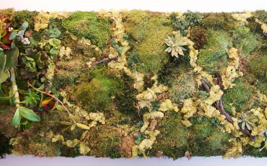 Moss Wall & Green Wall Galore!