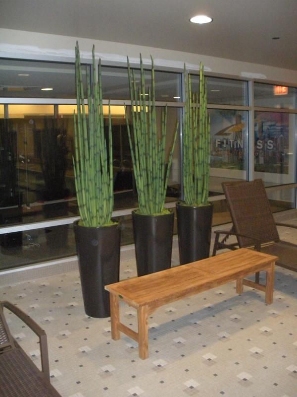 Image Result For Best Plants For Office