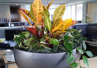 Colorful table top plants in decroative container