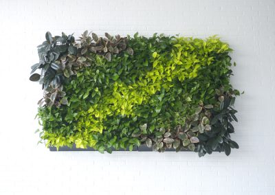 Green Wall suburban hotel