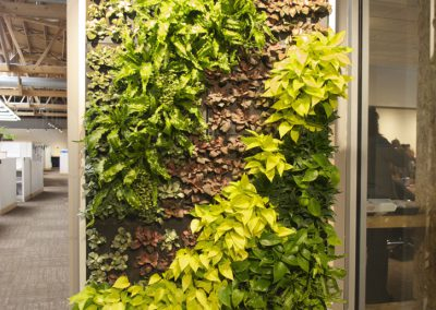 Green Wall with irrigation