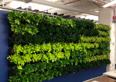 Green wall at Merchandise Mart
