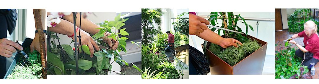 Phillip's Horticultural Technicians