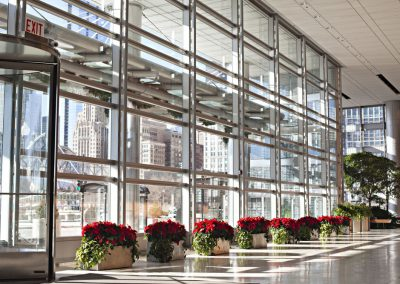 Main lobby Poinsettias