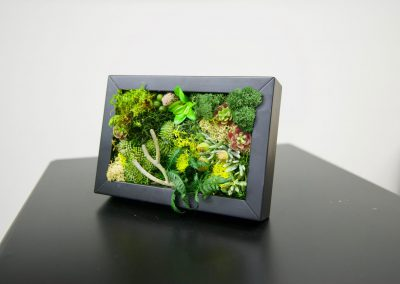 Mini preserved moss and succulent art