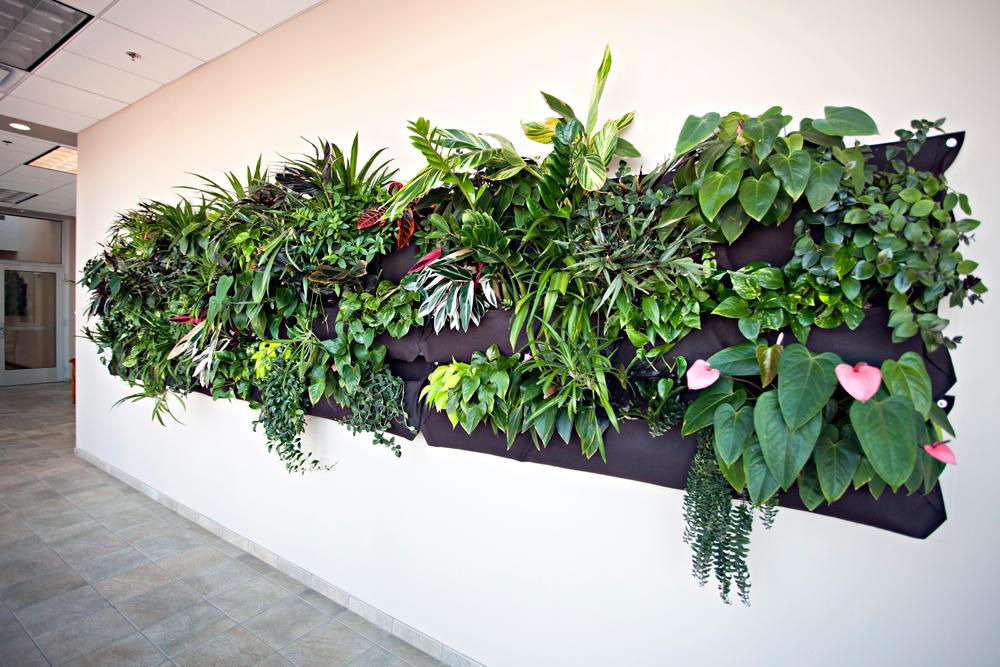 Phillipu0027s Interior Plants U0026 Displays
