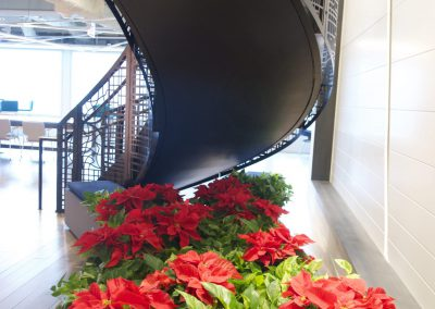 Poinsettias under stair