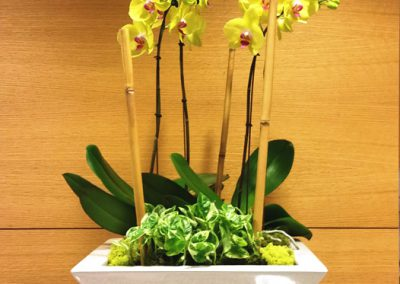 orchid-in-decorative-container