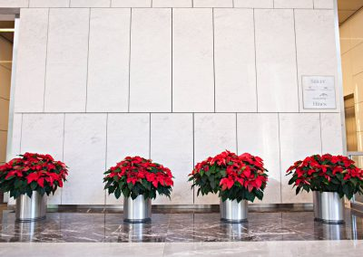 poinsettia-grouping