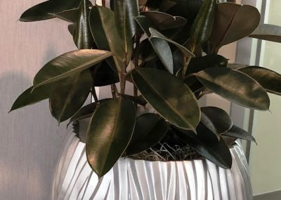Plant in silver container